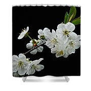 Apple Blossom 1015 Shower Curtain