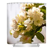 Apple Blossoms 9 Shower Curtain