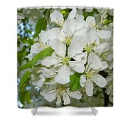 Apple Blossoms On The Trail Shower Curtain
