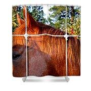 Apple Patrol Shower Curtain