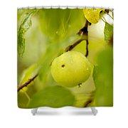 Apple Taste Of Summer Shower Curtain