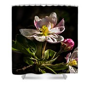 Apple Time Shower Curtain