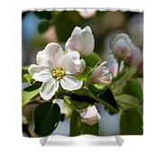 Apple Tree Flowers Shower Curtain