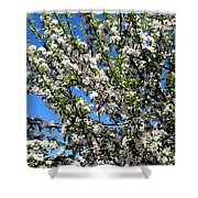 Apple Tree In Bloom Shower Curtain