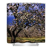 Apple Trees In An Orchard, County Shower Curtain