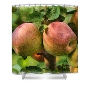 Apples Painterly Shower Curtain