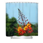 Aransas Nwr Texas Coast Shower Curtain