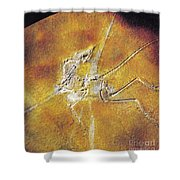 Archaeopteryx Lithographica Shower Curtain