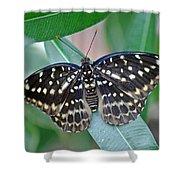 Archduke Butterfly Shower Curtain