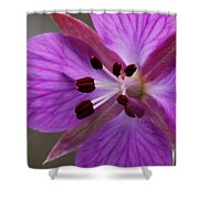 Arctic Riverbeauty Shower Curtain