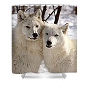 Arctic Wolves Close Together In Winter Shower Curtain