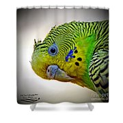Are You Following Me Shower Curtain