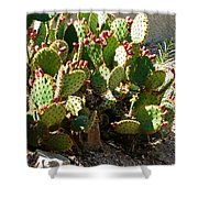 Arizona Prickly Pear Cactus Shower Curtain