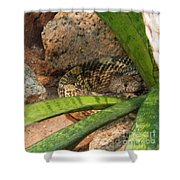 Arizona Rattler Shower Curtain