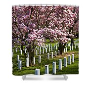 Arlington Cherry Trees Shower Curtain