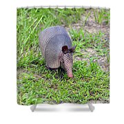Armored Armadillo 01 Shower Curtain