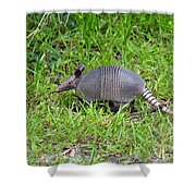 Armored Armadillo 02 Shower Curtain