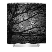 Arms Of The Night Shower Curtain