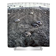 Arribada Of Olive Ridley Turtles, Costa Shower Curtain