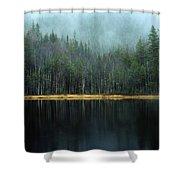 Arrow-straight Evergreens Are Reflected Shower Curtain
