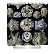 Artforms Of Nature Shower Curtain