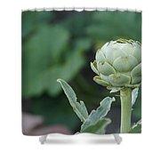Artichoke In The Garden Shower Curtain