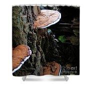 Artist Conk Mushroom  Shower Curtain