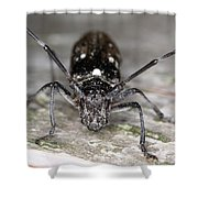Asian Long-horned Beetle Shower Curtain
