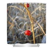Asparagus Berries Shower Curtain
