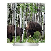 Aspen Bison Shower Curtain