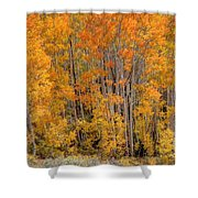 Aspen Forest In Fall - Wasatch Mountains - Utah Shower Curtain