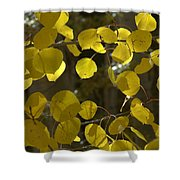 Aspen Glow Shower Curtain