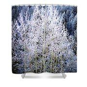 Aspen Lace Shower Curtain