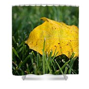 Aspen Leaf Shower Curtain