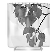 Aspen Leaves In Black And White Shower Curtain