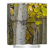 Aspen Panorama Shower Curtain by Andrew Soundarajan