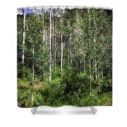Aspen Trees - Vail Shower Curtain