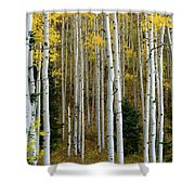 Aspen Trunks Shower Curtain