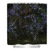 Aster Days Shower Curtain