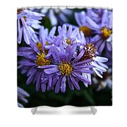 Aster Dew Drops Shower Curtain