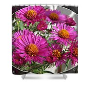 Aster Named September Ruby Shower Curtain
