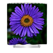 Aster Trio Shower Curtain
