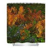 Asters And Ferns Shower Curtain
