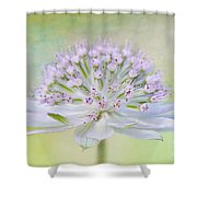 Astrantia Art Shower Curtain by Jacky Parker