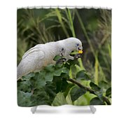 At The Dinner Table Shower Curtain