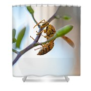 At Work. Busy Bee Shower Curtain