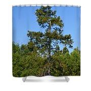 Atchafalaya Basin 42 Shower Curtain