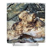 Atlantic Octopus In Shell Debris Shower Curtain