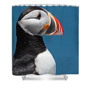 Atlantic Puffin Shower Curtain