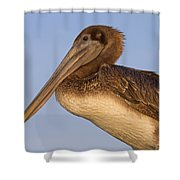 Augustine Brown Shower Curtain